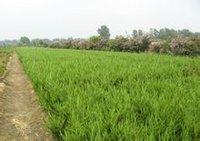 江苏沭阳远通苗木园艺场提供龙柏