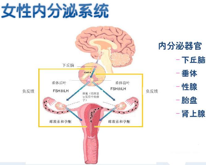 黄体萎缩不全者同时伴有月经量多;子宫内膜修