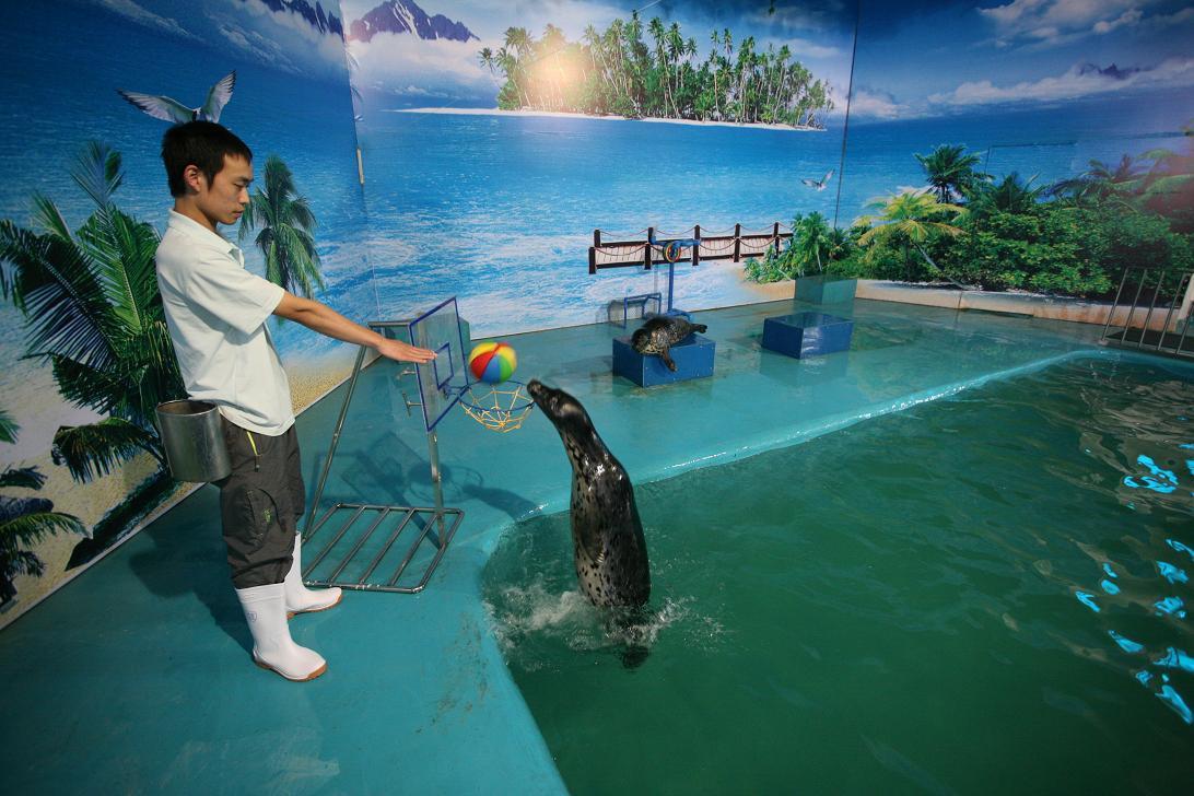 认识占地球的海洋及其海洋水生动物