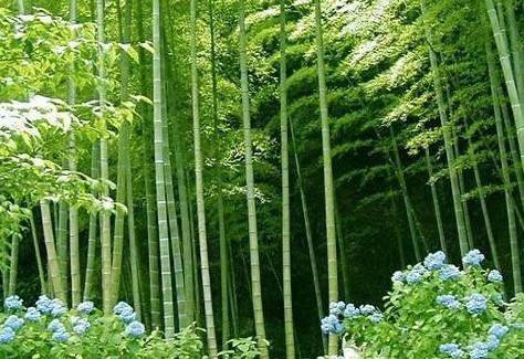 壁纸 风景 植物 桌面 474_325