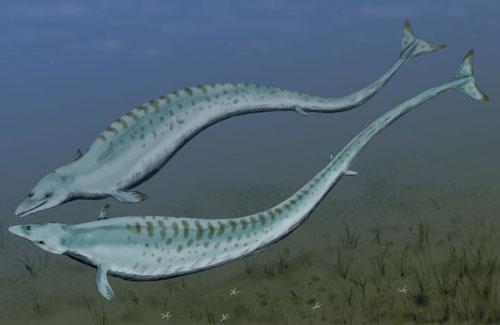 它们的骨骼也提醒人们其陆地动物的祖先:一双小脚