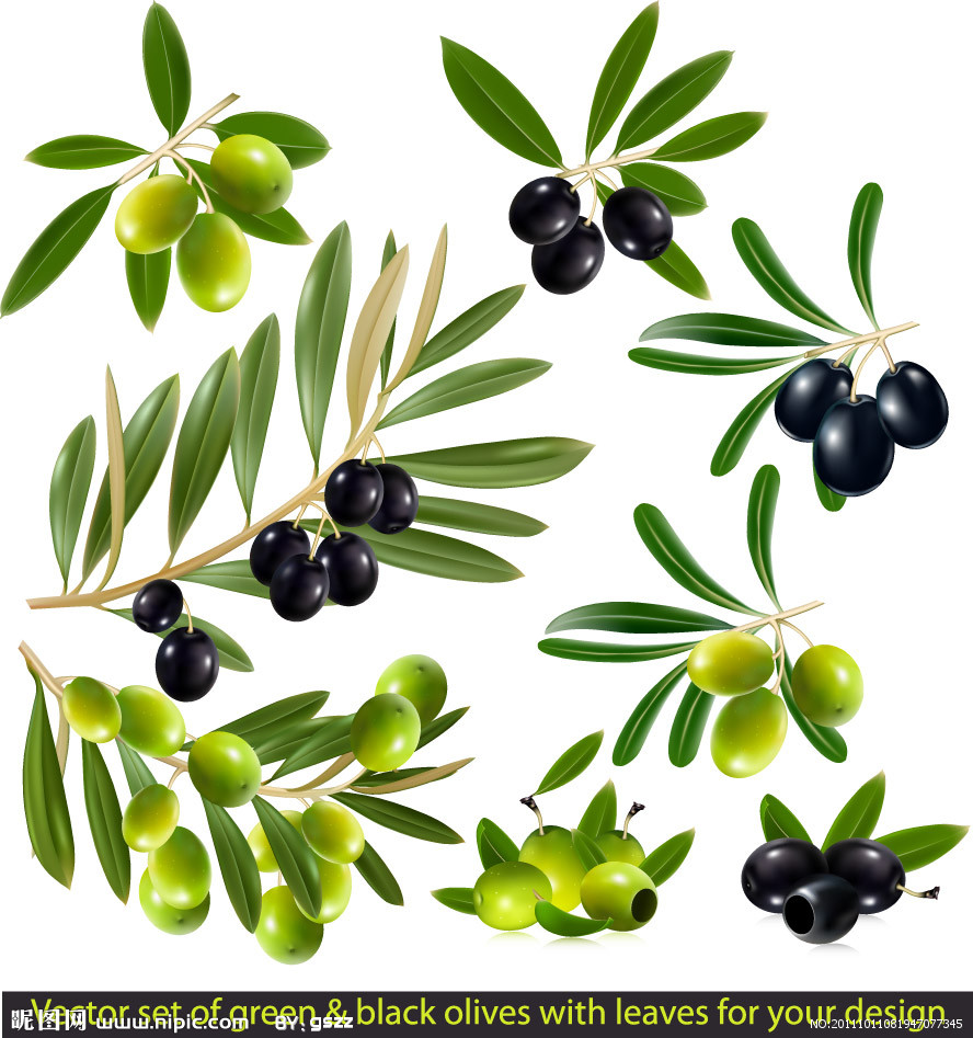 橄榄树枝如黑胶的,烧烤时气味清烈