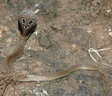 眼镜蛇的崛起_眼镜蛇的崛起高清